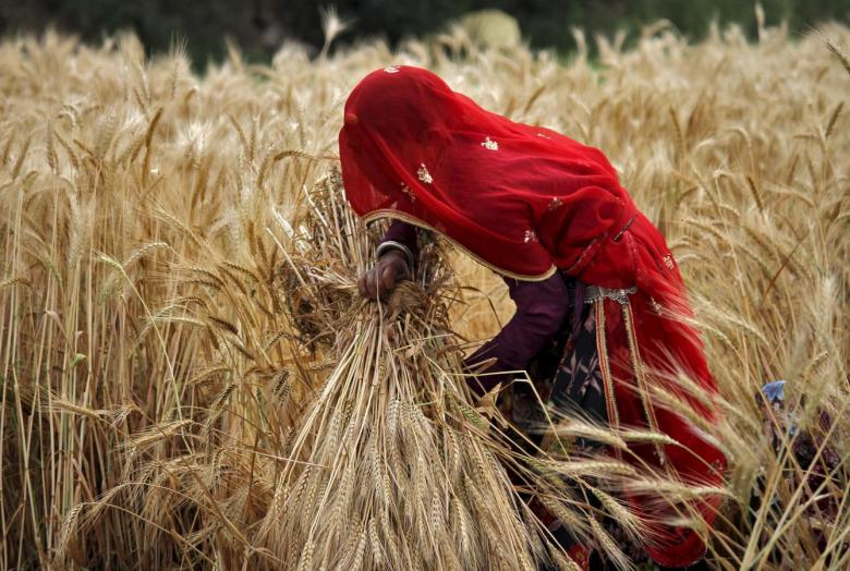 Indian WOmen farmers
