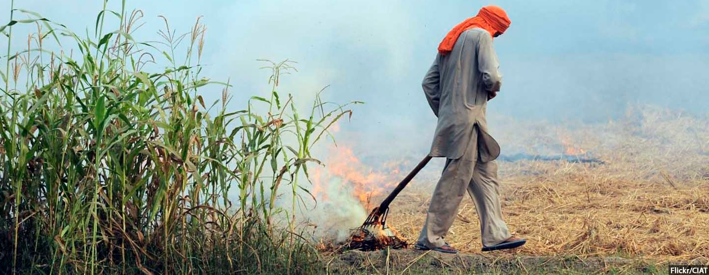 Air Pollution, health budget, Crop