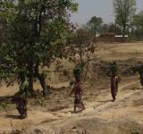 India's Indigenous