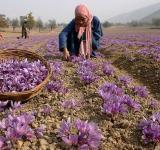 Kashmir, economy