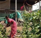 Rural Women,