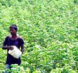 Telengana Farmers