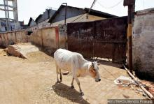 Up Slaughter House